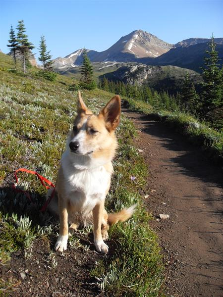 Click on photo for original larger-size version.